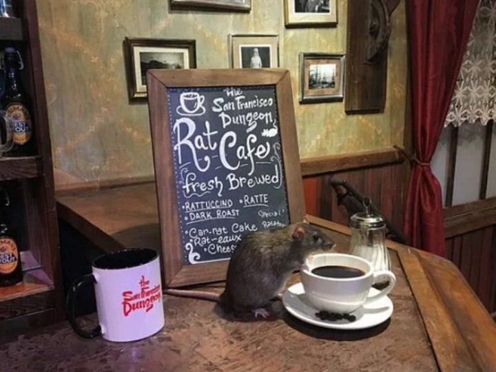 Rat Cafe: que tal tomar um café acompanhado por ratos?