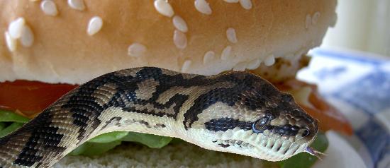 Você comeria hambúguer de carne cobra?