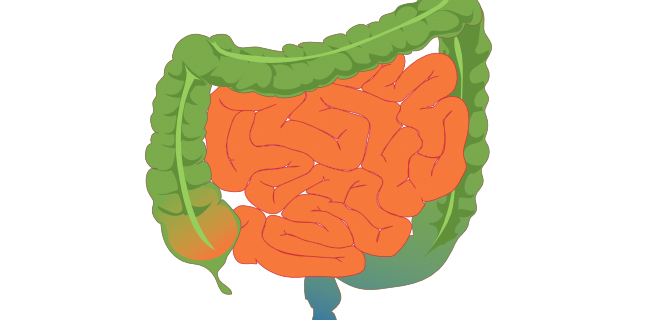Hormônio do intestino ajuda a reduzir apetite