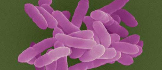 KPC e os antibióticos