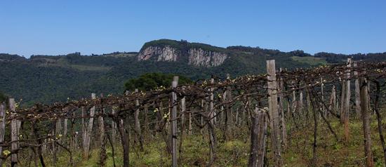 Gordices na Serra Gaúcha